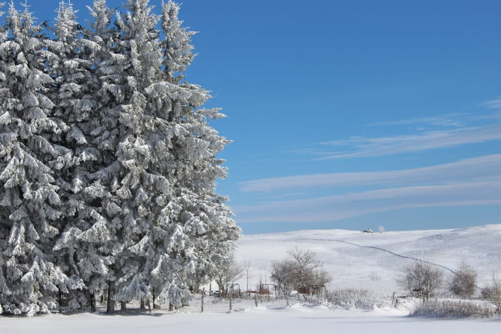 Aubrac under the snow